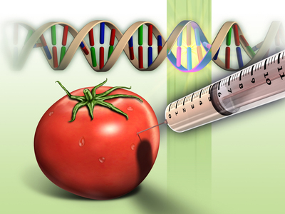 Dangers of Genetically modified foods