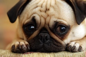 Diarrhea in dogs symptoms natural cures