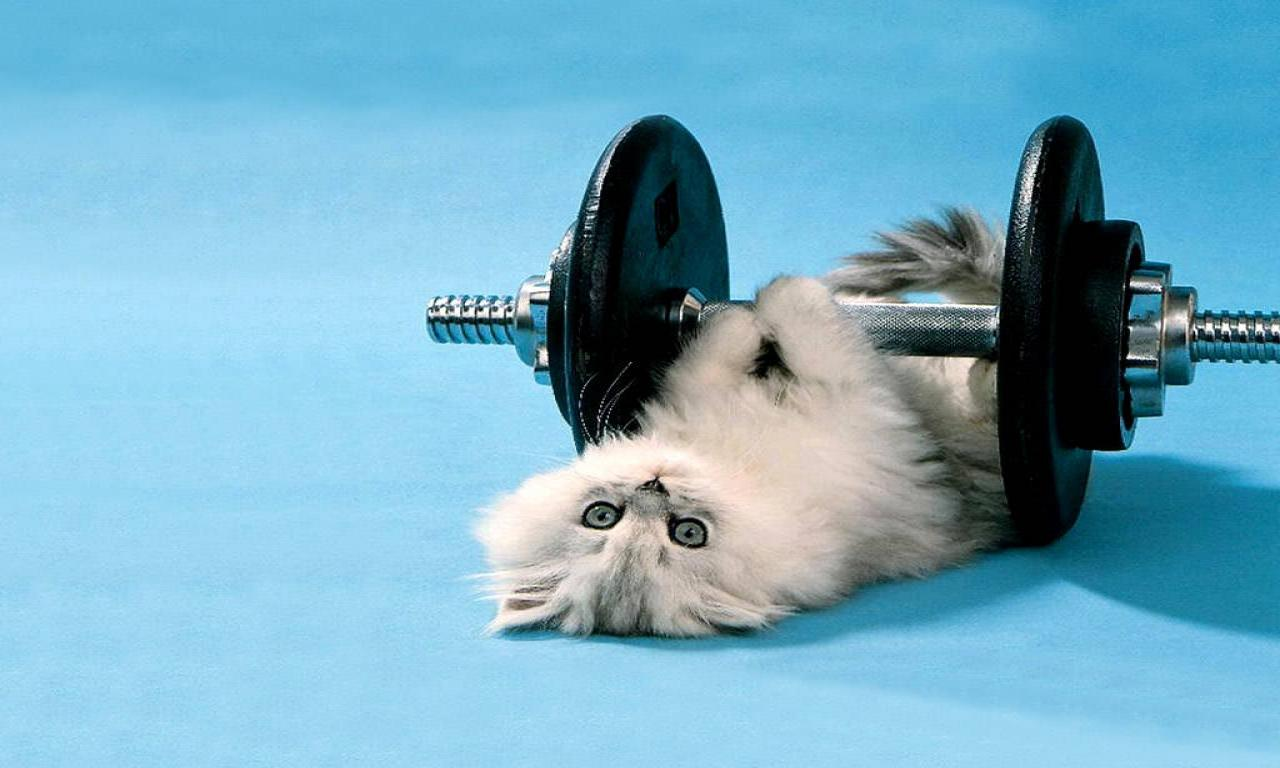overweight pet exercises