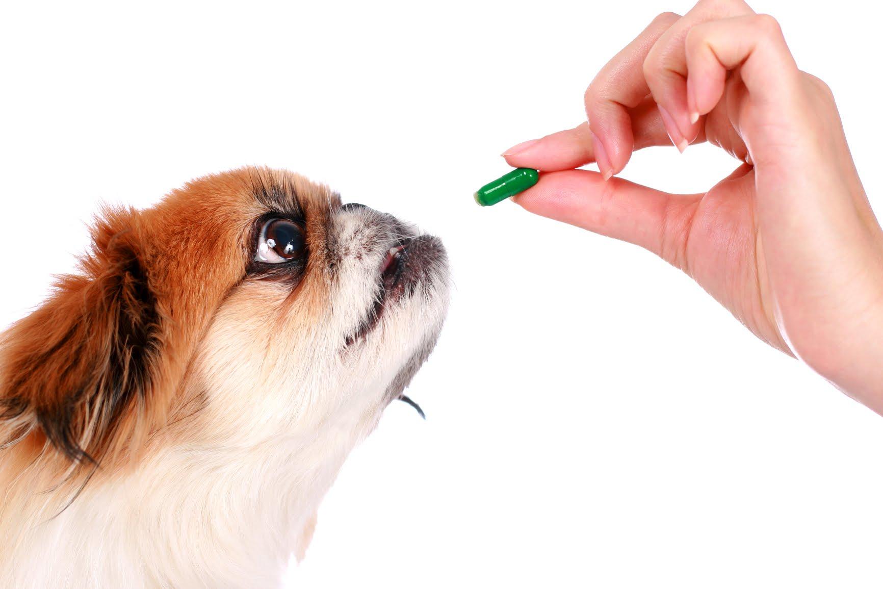natural dog supplements and vitamins